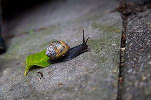 Escargot sur la terrasse