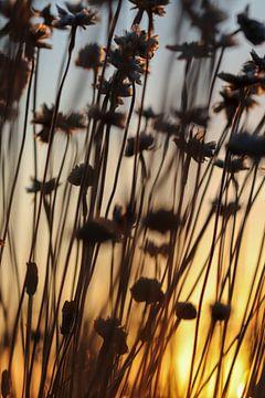 Blumenbad von Noor van Duijvenboden