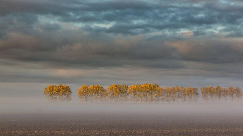Treeeeeeeees van Bram van Broekhoven