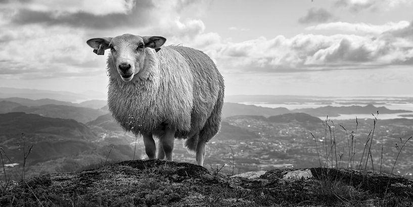 Wenn ein Schaf über dem Berg ist..... von Twan van Vugt