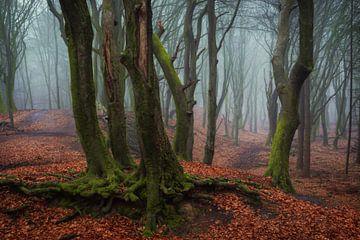 Mistery Forest van Martin Podt