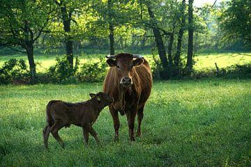 Kuh mit ihrem Kalb von Herman Peters