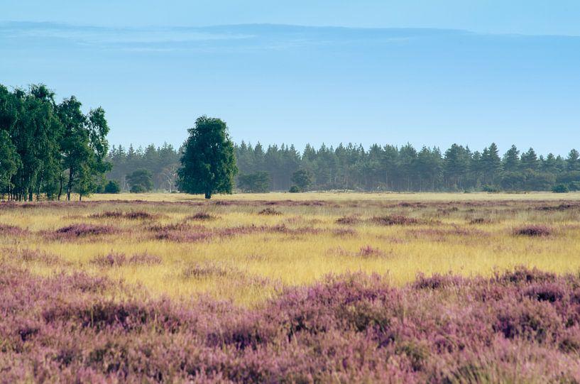 Strabrechtse Heide 121 van Desh amer