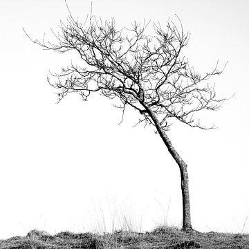 Against the wind von Heiko Westphalen