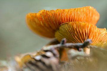 champignons orange sur Tania Perneel