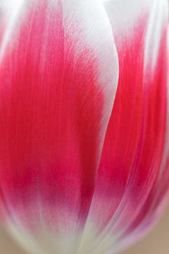 Tulp sur Bart van Dinten