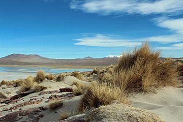 Boliviaanse hoogvlakte van Marieke Funke