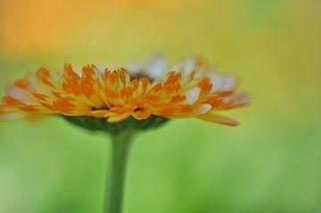 Warmes Orange III von Bianca Dekkers-van Uden