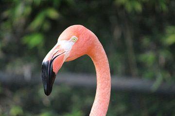 Flamingo van Martin van den Berg Mandy Steehouwer