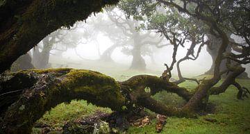 Sprookjeslandschap op Madeira van Martijn van Huffelen