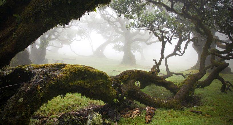 Fairytale landscape von Martijn van Huffelen