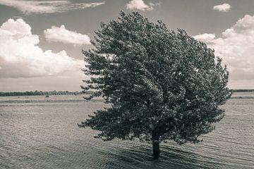 Verdronken boom van Mark Veldman