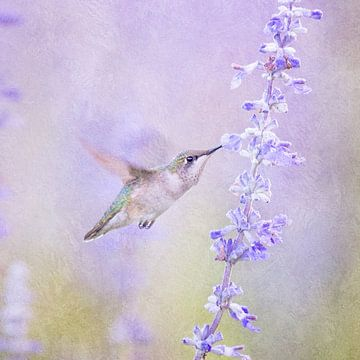 Kolibrie Vogel En Lavendel Bloem In Pastel Paars van Diana van Tankeren