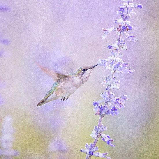 Kolibrie Vogel (Hummingbird) En Lavendel In Pastel Paars van Diana van Tankeren