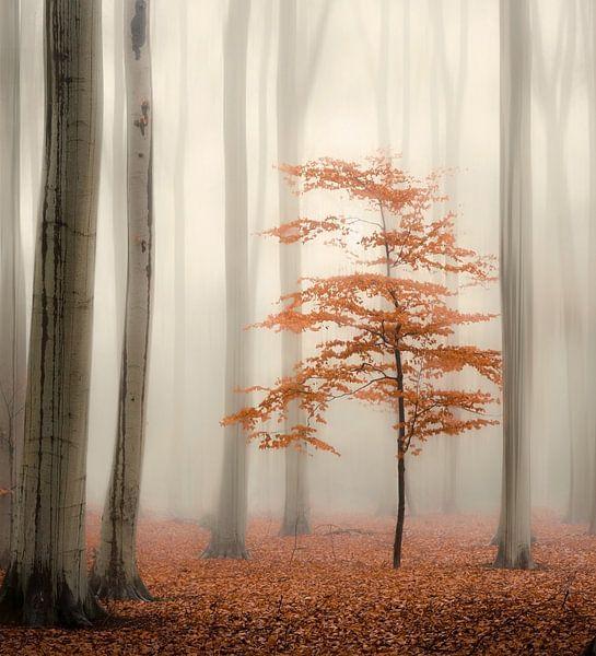 One tree life - The little one van Rob Visser
