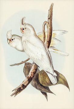 Naaktoogkaketoe 1804-1841 van Rudy & Gisela Schlechter