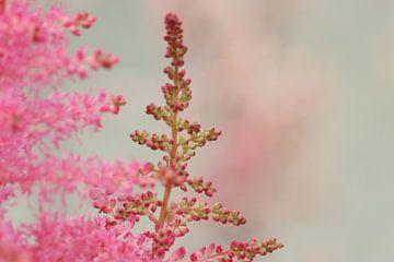 Rustig roze, kleine roze bloesem van Leontien van der Willik-de Jonge