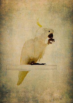 Gelber Kamm Kakadu 2 von Anouschka Hendriks