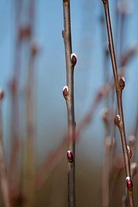 Eerste tekenen van de lente