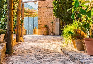 Mediterraan terras met mooie potplanten en idyllisch licht van de zonsondergang van Alex Winter
