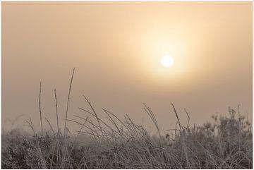 zonsopkomst van Hetwie van der Putten
