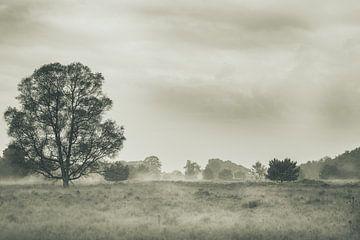 einsamer Baum im Nebel von eric brouwer