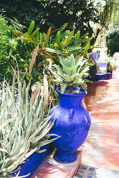 Blauer Blumentopf von Patrycja Polechonska