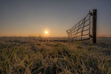 Hekwerk weiland met zon von Moetwil en van Dijk - Fotografie
