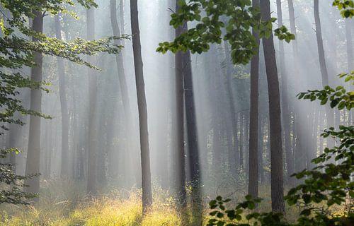 Magisch bos von Miranda Snoeijen