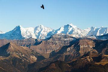 Eiger, Monch et Jungfrau avec un oiseau solitaire en automne. sur Hidde Hageman