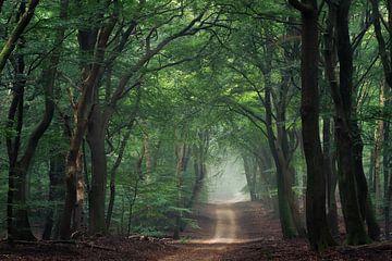 Pad naar het bos van Martin Podt