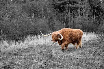 De Stier von Erik Reijnders