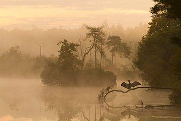 's morgens vroeg tijdens de zonsopkomst staat een aalscholver op te drogen op een tak boven het voor van Paul Wendels