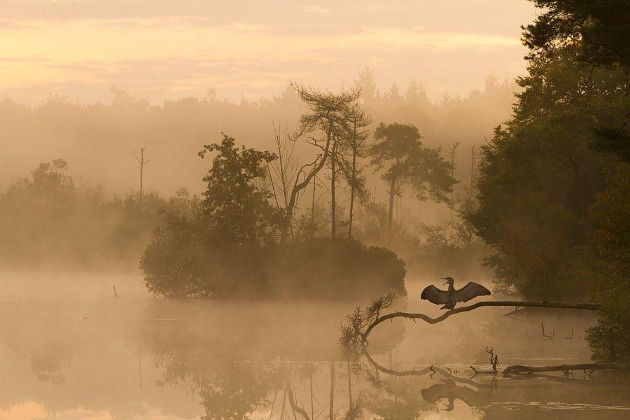 's morgens vroeg tijdens de zonsopkomst staat een aalscholver op te drogen op een tak boven het voor