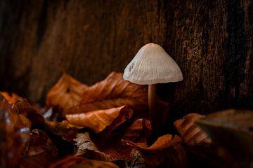 Mushroom van Renate Winder