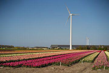 tulpenvelden nederland van Kim Groenendal