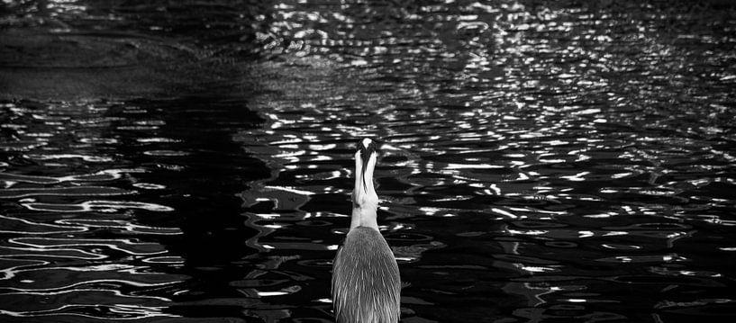 Reiger aan het water van Godelieve Luijk