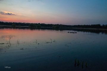 Gruppe von Entenküken bei Sonnenuntergang von lotte .de Bruyn