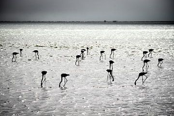 Flamingo's van Steven Symoens