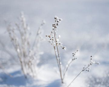 Ijsbloemen van Anouschka Hendriks