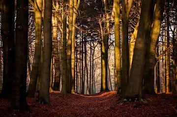 Donker herfstbos van Jan Diepeveen