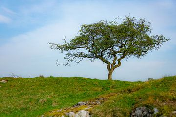 Grillige boom van Silvia Rikmanspoel