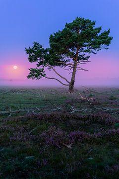 Volle maan vlak voor een paarse zonsopkomst op de Bussumerheide van Michiel Dros
