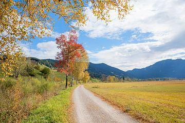 Wandelweg door de Pulvermoos bij Unterammergau van