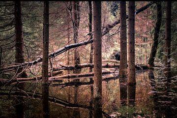 groot donker bos met reflectie in geometrie. Big dark woods with reflectionn in geometry. van Mariska Asmus
