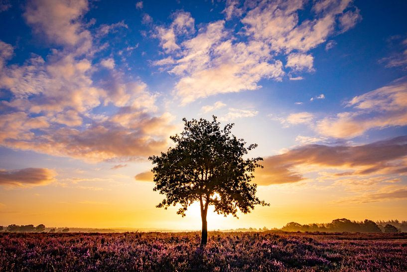 Eenzame boom van Sam Mannaerts Natuurfotografie
