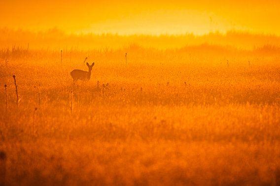 Ree in veld