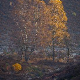Herfst op de Veluwezoom - 2 van Sander Grefte