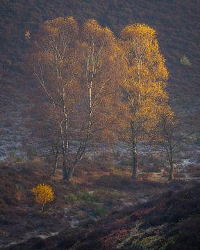 Couleurs d'automne sur le Posbank sur Sander Grefte