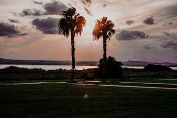Palmen Sonnenuntergang von Shelena van de Voorde
